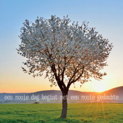 Eco wenskaart blanco 'Een mooie dag' – dubbel met enveloppe