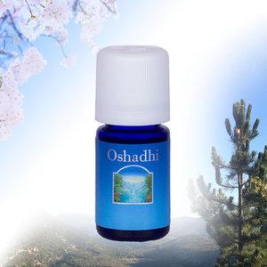 Vetiver Oshadhi - balans wanneer alles je overweldigt